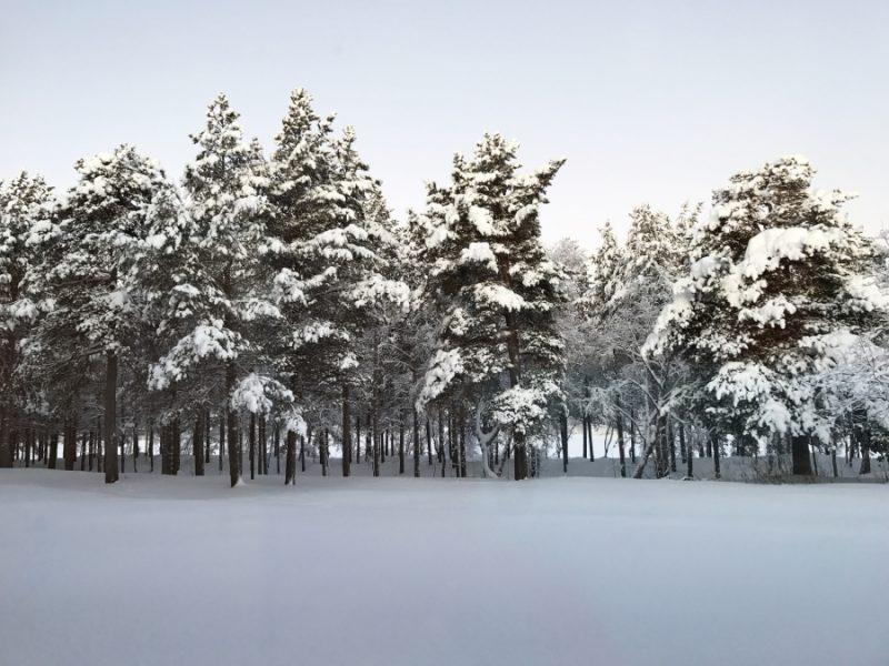 Les forêts couvrent 75% des terres finlandaises, les éleveurs de rennes samis s'inquiètent des effets de l'exploitation forestière sur les pâturages. Cette photographie est la vue depuis le parlement sami dans le nord de la Finlande. Crédit: Sonia Narang/PRI