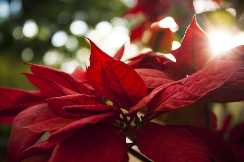 Ten quintessential Christmas tunes from Trinidad & Tobago