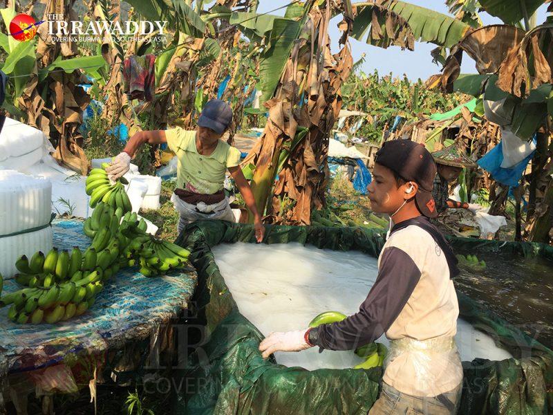 DES ASIES À L'ASSAUT DU MONDE ? Kachin-800x600