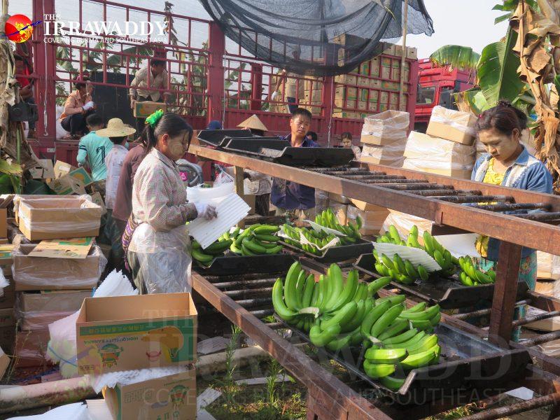 DES ASIES À L'ASSAUT DU MONDE ? Kachin-banana-800x600