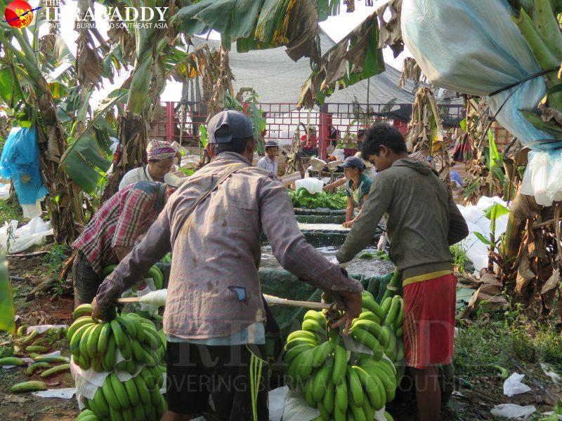 DES ASIES À L'ASSAUT DU MONDE ? Kachin-workers-800x600