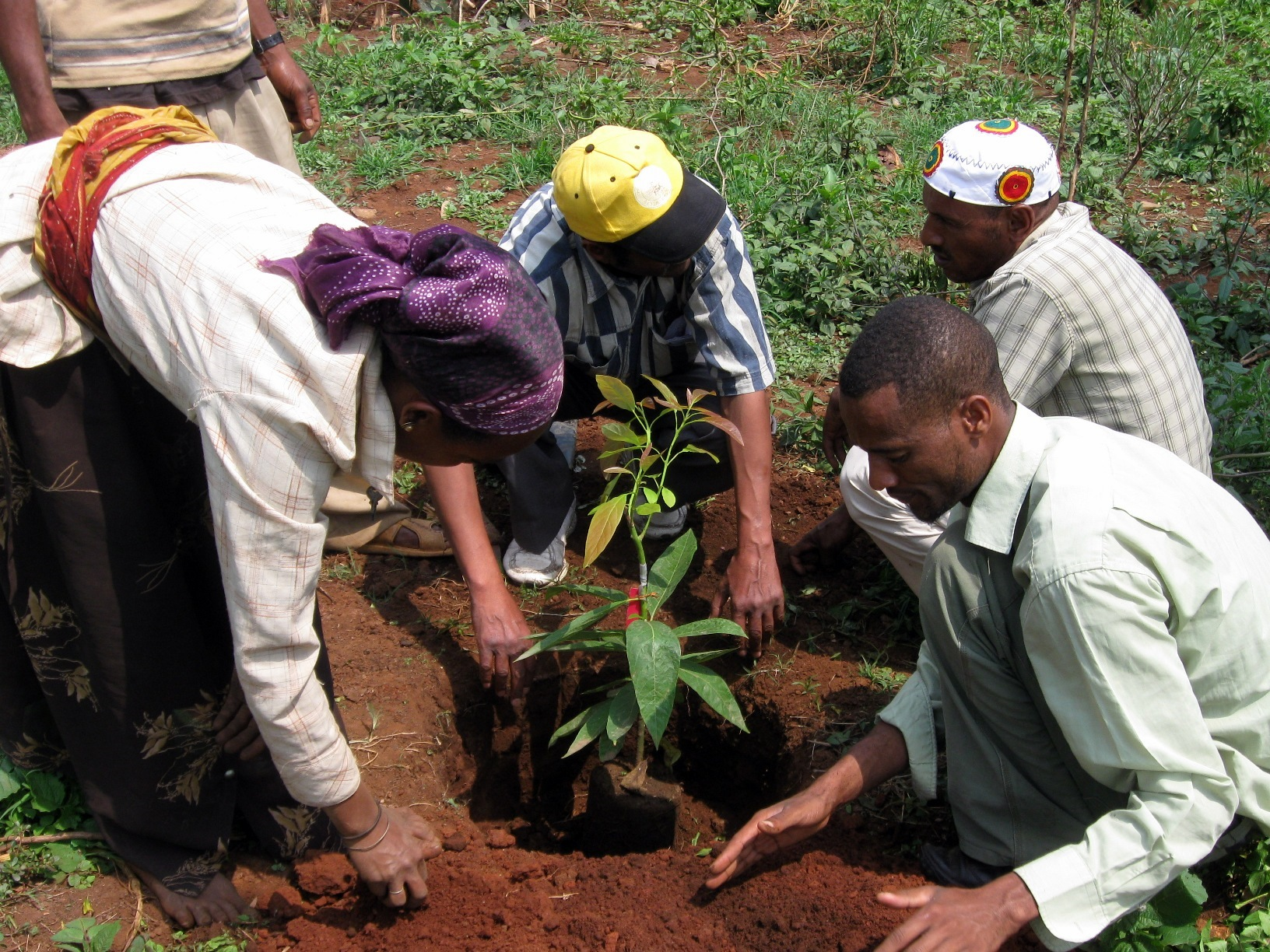 Mass tree-planting in Ethiopia broke world records, but its impact will take time