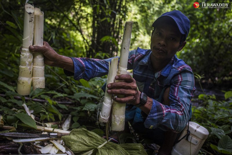 Ko Pho La, en chemise à carreaux et casquette, tient dans les deux mains des pousses de bambou; Devant lui, des couteaux et des feuilles d'arbre.