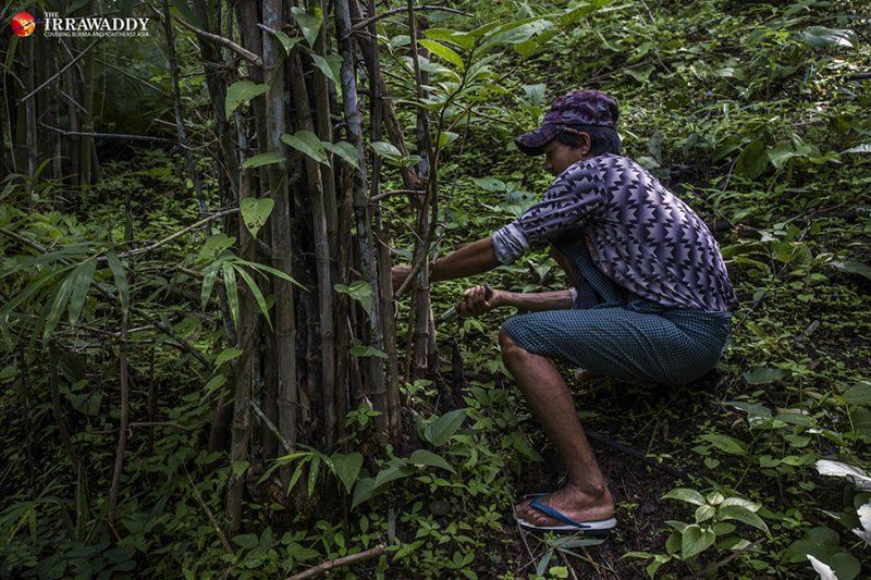 Ko Pho La est accroupi dans une forêt dense et verdoyante, en train de couper des pousses de bambou.