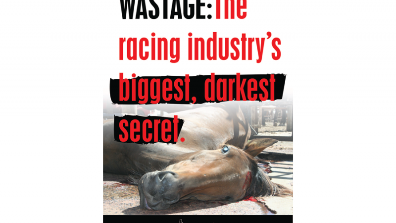Matanza de caballos de carreras divide a la nación por simbólica Copa Melbourne - Global Voices en Español