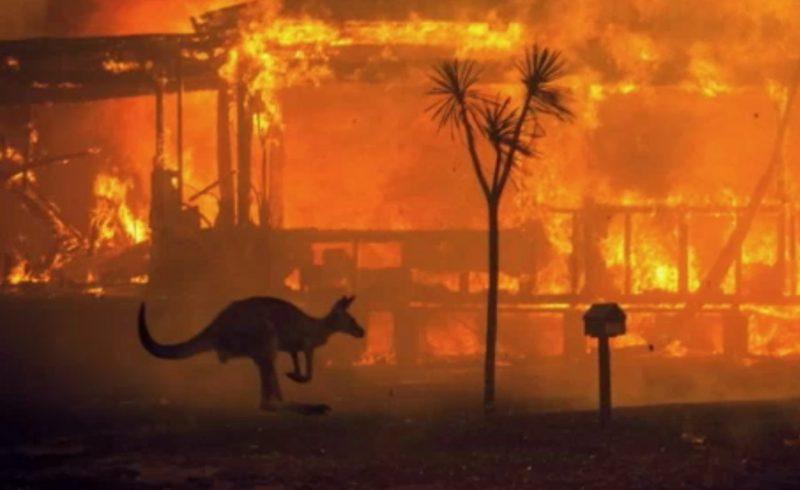 Screenshot: nieuwsvideo van Australian Broadcasting Corporation Australiërs openen hun huizen voor gewonden en weeskinderen in de natuur in de bosbranden (8 januari 2020)