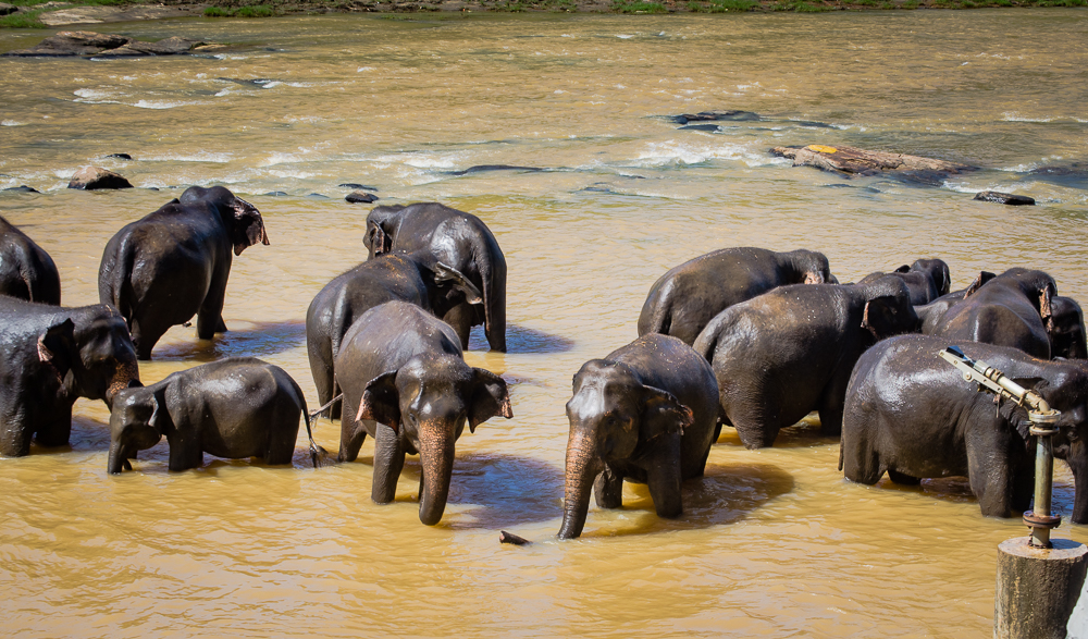 Conservationists decry Sri Lankan decision to arm local groups against elephants