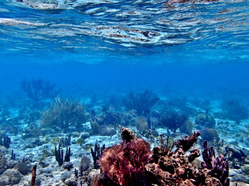 Vue sous-marine des coraux