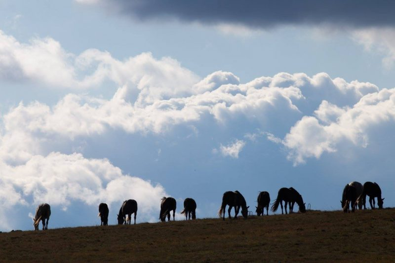 Horse silhouettes with a background of blue sky and white clouds on Mount Cincar, near Livno in Bosnia and Herzegovina.