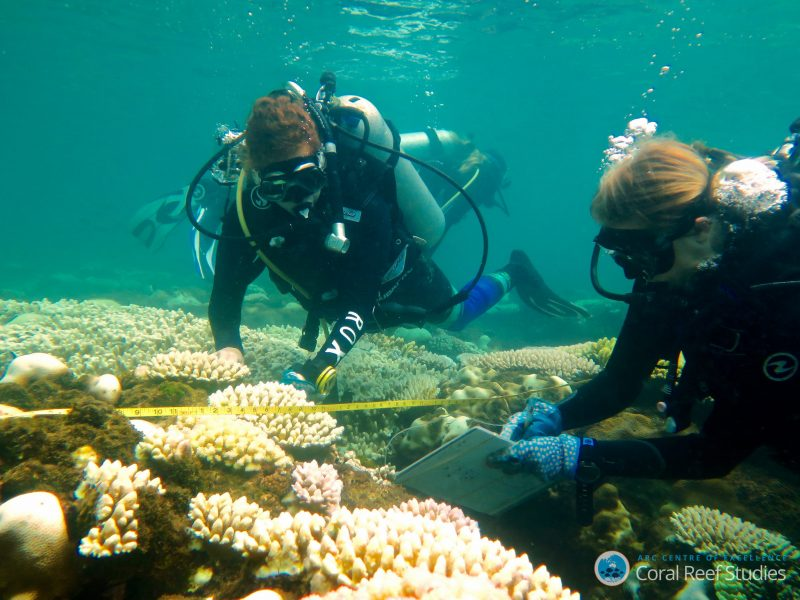 Coral bleaching severity survey on Orpheus Island 2017