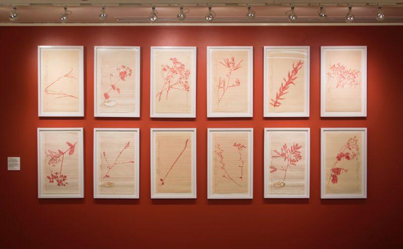 Douze (12) dessins de taille moyenne représentant des plantes sauvages de couleur rouge éclairées et encadrées dans des cadres blancs sur un fond uniforme rouge.