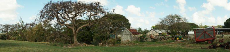 Diaporama de la maison et de l'atelier de l'artiste Annalee Davis, situé en Barbade, montrant un grand arbre au premier plan et une ferme laitière sous un ciel bleu au deuxième plan.