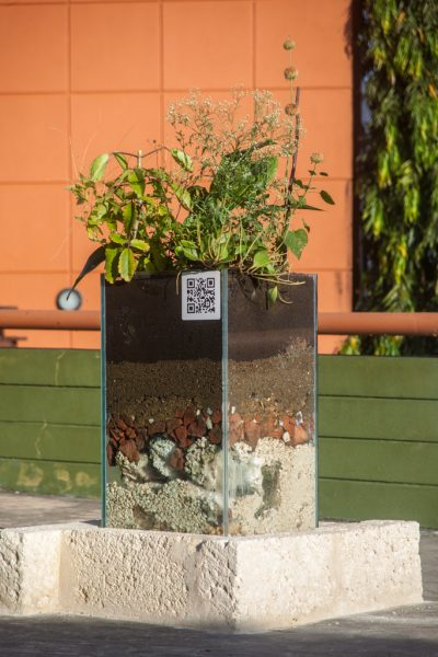 Une jardinière en verre qui dévoile les couches du sol duquel jaillit une sélection de 12 plantes médicinales aux propriétés curatives.