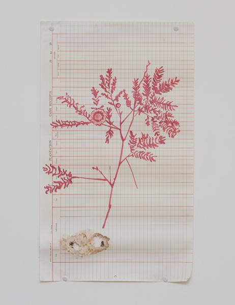 Une photo rapprochée d'un dessin de plante sauvage de couleur rouge sur un papier du registre des plantations légèrement troué au bas de la feuille.