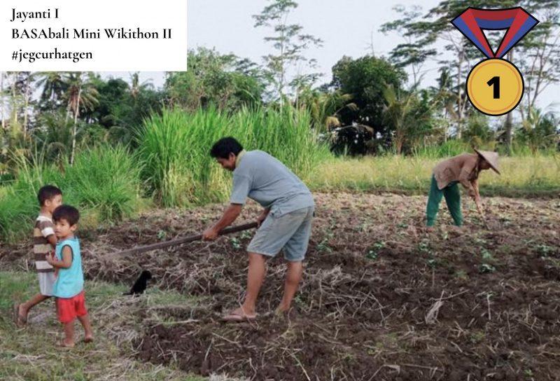 Une famille indonésienne travaillant dans les champs. Les deux parents retournent un carré de terre pour y cultiver des légumes, pendant que les enfants jouent sur le côté.