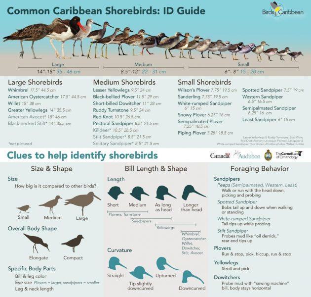 Plaquette d'information présentant les différentes espèces d'oiseaux du rivage et leurs caractéristiques.