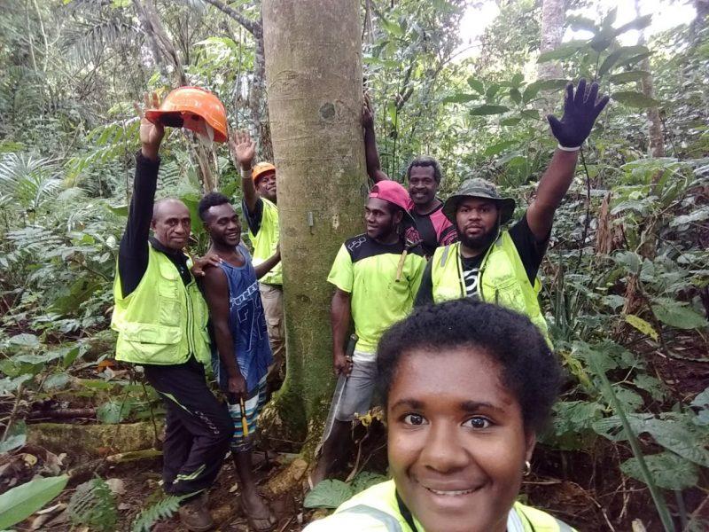 Une équipe de forestiers au Vanuatu, assemblée autour d'un arbre, lève les bras au ciel en signe de joie. Ils portent des chemises réfléchissantes et des casques jaunes.