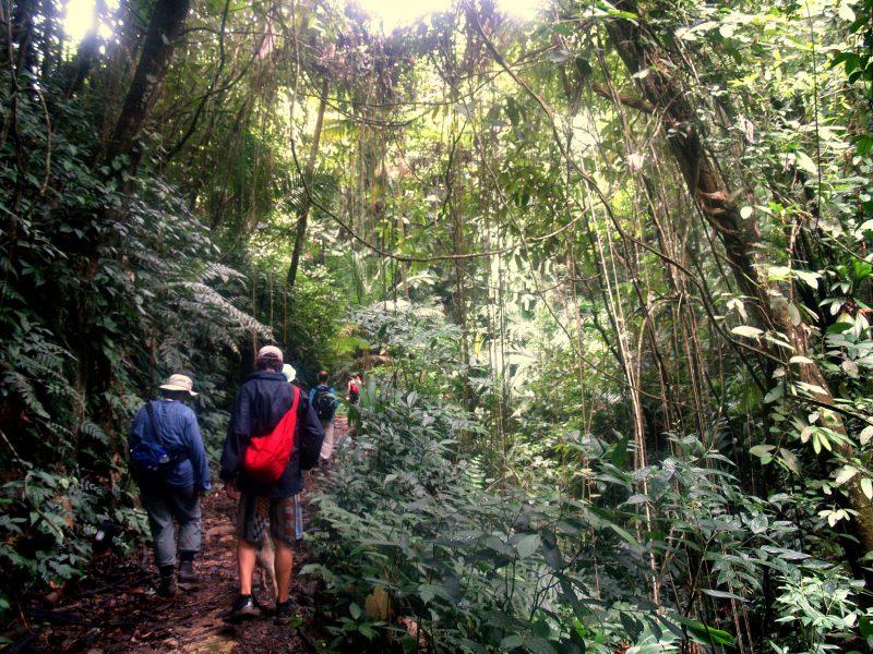 Des marcheurs de dos sur un sentier de la réserve forestière de Tobago Main Ridge