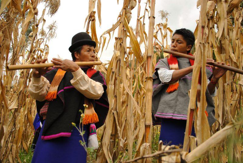 L'image montre 2 hommes jouant de la flûte kuv' dans un champ de maïs. Ils sont vêtus d'habits et chapeau traditionnels.