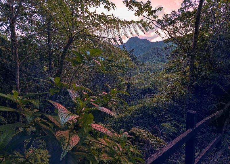 La jungle est photographiée dans des tons ochres. On aperçoit au fond un sommet montagneux.