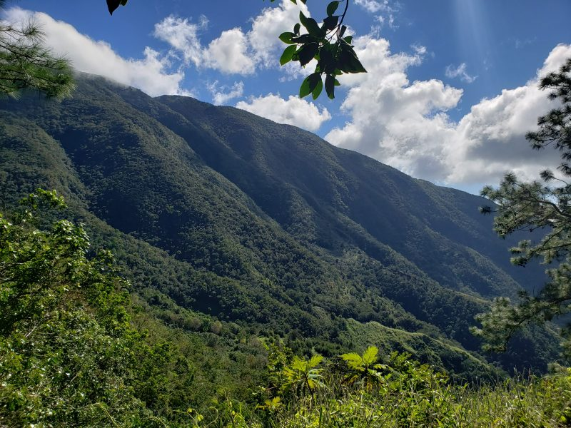 The photo by Kabrina Hylton that won first place in the Youth category of the Jamaica Conservation and Development Trust's photography competition celebrating the 28th anniversary of the Blue and John Crow Mountains National Park. Photo courtesy the JCDT, used with permission.
