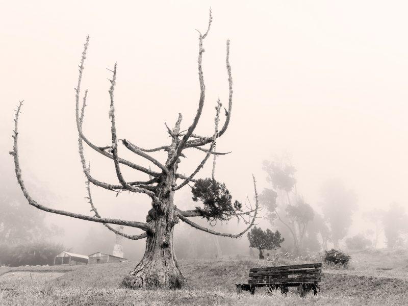 Photo sépia d'un arbre dénudé aux branches pointant vers le ciel, à côté d'un banc vide. Le fond est flou, disparaissant dans les nuages.