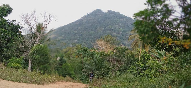 Земляна дорога, оточена зеленою рослинністю, над якою височіє пагорб.