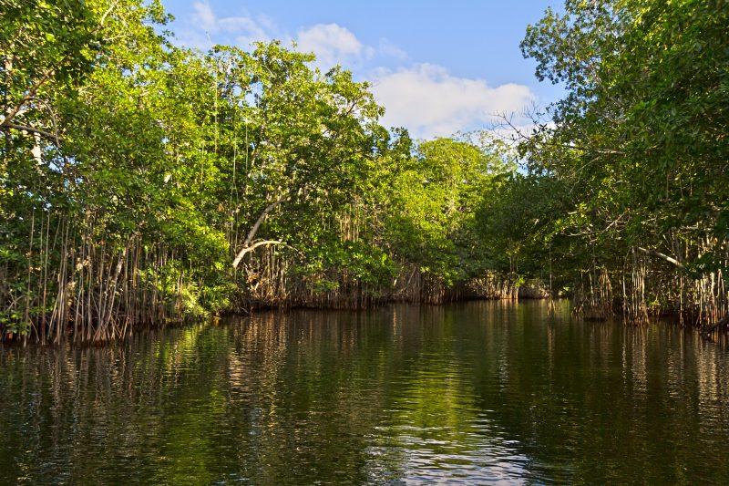 Cours d'eau bordé de mangroves sous un ciel bleu