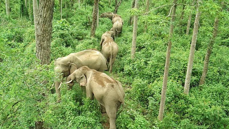 Image by Salik Ram Chaudhary
