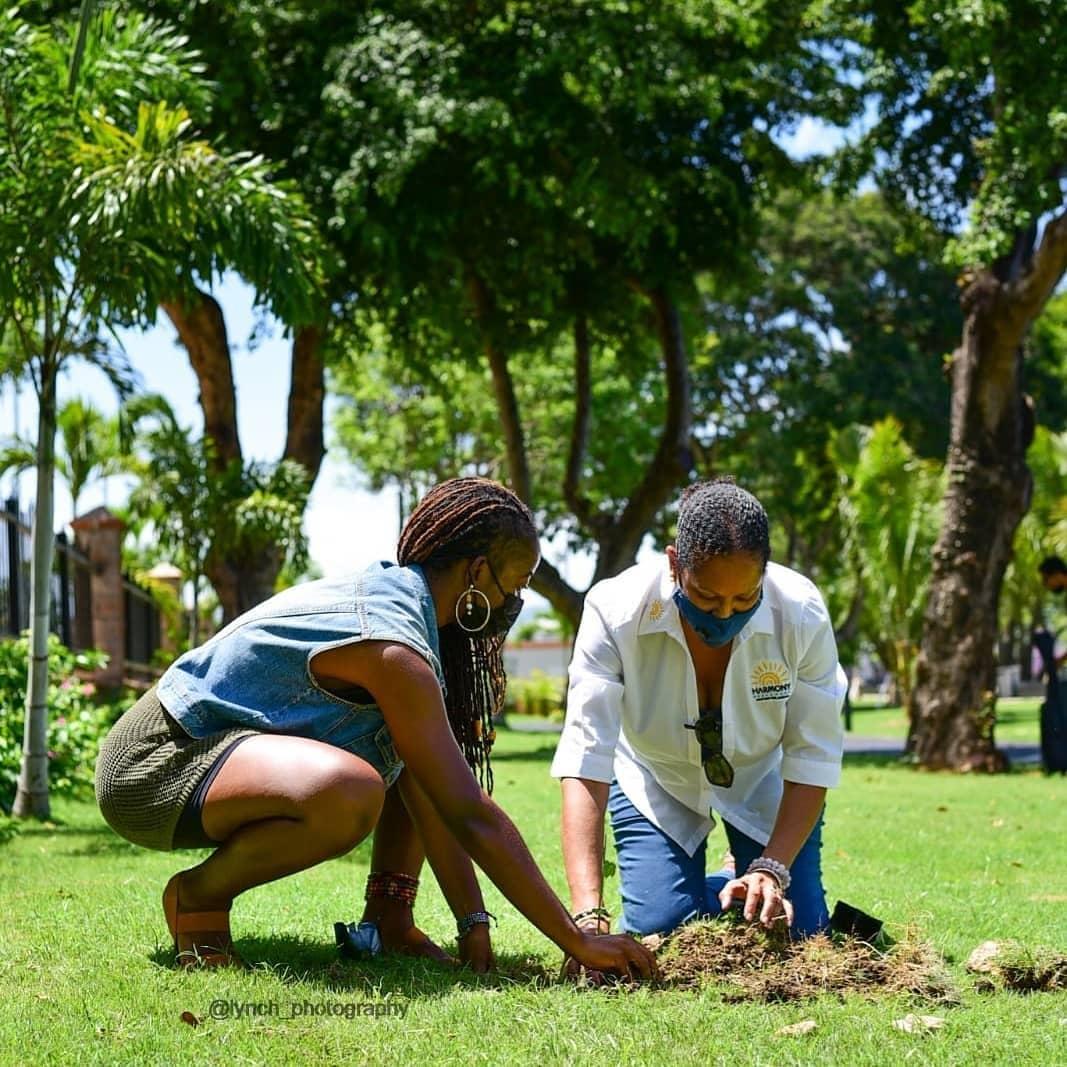 Deux caribéennes sont accroupies dans le gazon, autour d'un arbre fraichement planté.
