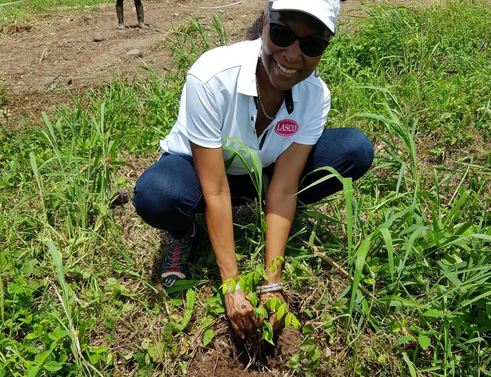 Une caribéenne plante un arbre tout sourire
