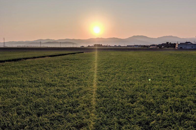 Rice fields in Sakai, Fukui