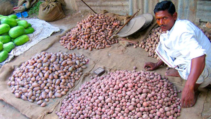 Potato Grading in Bangladesh. Image from Flickr by Bengal*foam. CC BY-ND 2.0.
